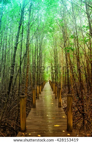 Mangrove forest, wood bridge in mangrove forest, tree in mangrove forest - stock photo