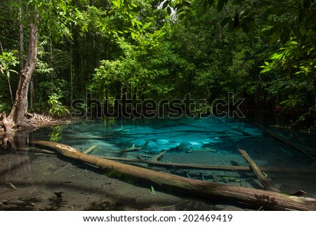 mangrove forests in Krabi province Thailand  - stock photo