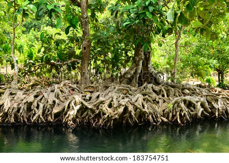 Mangrove Forests in Krabi Thailand - stock photo