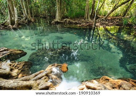 Mangrove forests in Krabi ,Thailand  - stock photo