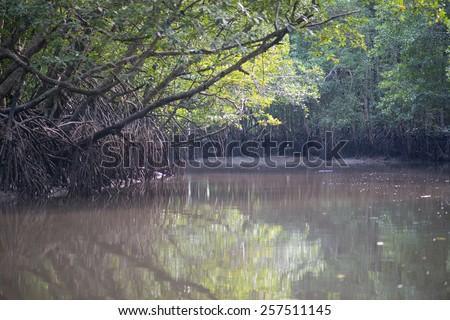 Mangrove forests swamp with river in Malaysia - stock photo