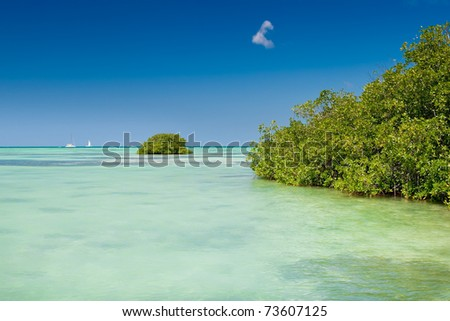 Mangrove green forest in a blue ocean in summer Dominican republic - stock photo