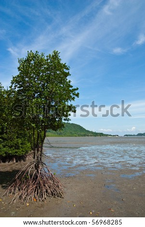 Mangrove in eastern of thailand - stock photo