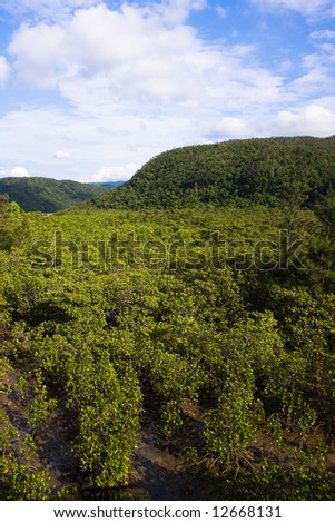 Mangrove jungle from above - stock photo