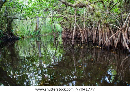 Mangrove lagoon in the Florida Everglades - stock photo