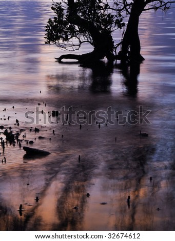 Mangrove roots at sunrise - stock photo