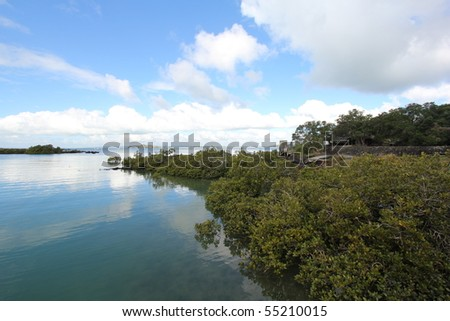 Mangrove shoreline at the island bay - stock photo