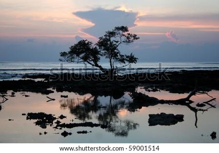 Mangrove Sunset, Taken at Neil Island, Andaman Islands, India. - stock photo