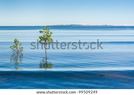 Mangrove to Analalava, western Madagascar - stock photo