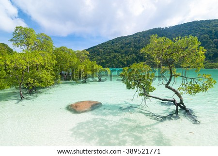 Mangrove tree in clear water - stock photo