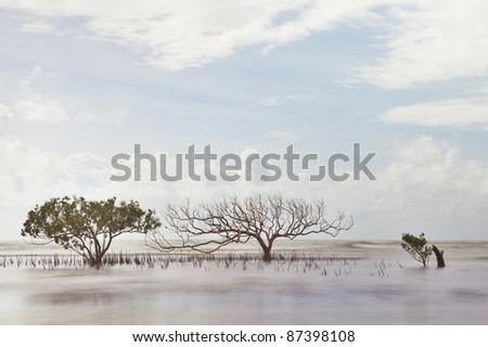mangrove tree in sea with roots coming out of water long exposure makes sea and leaves blurred a death one next to a living - stock photo