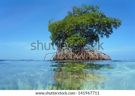 Mangrove tree islet viewed from the water surface, Bocas del Toro,Caribbean sea, Panama - stock photo