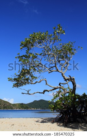 Mangrove tree over blue sky, El Nido, Palawan, Philippines - stock photo