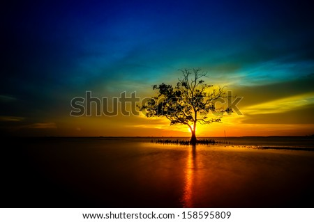 Mangrove tree stands lonely during sunset - stock photo