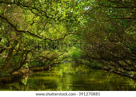 Mangrove tree tunnel above a river in Taiwan - stock photo