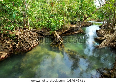 mangrove tree with roots along the turquoise blue water in the stream - stock photo