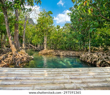 Mangrove trees along the turquoise green water with a bamboo bridge in the front - stock photo