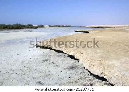 Mangrove trees and desert. Egypt, Africa. - stock photo