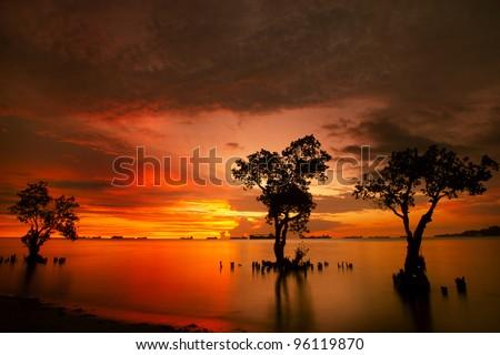 Mangrove trees and landscape sunset scene at Nirvana Beach, Padang, Sumatera Island, Indonesia. Taken on long exposure. - stock photo