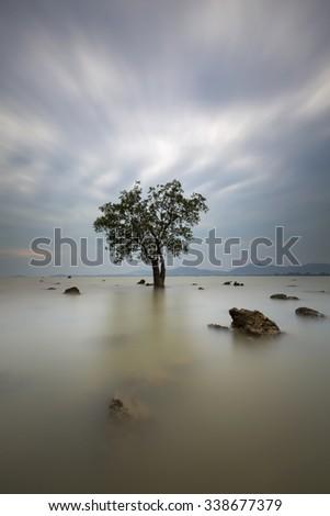 Mangrove trees and landscape sunset scene at Phuket Thailand. Taken on long exposure. - stock photo