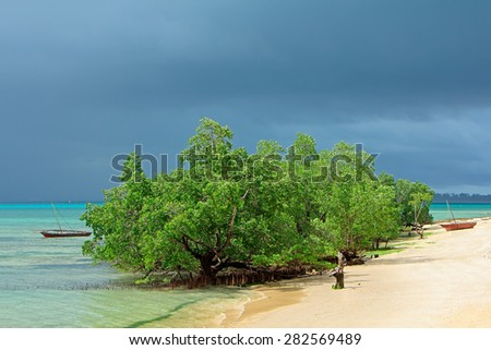Mangrove trees and rain clouds on the tropical coast of Zanzibar island  - stock photo