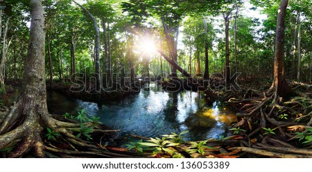 Mangrove trees in a peat swamp forest and a river with clear water. Tha Pom canal, Krabi province, Thailand - stock photo