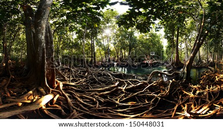 Mangrove trees in a peat swamp forest. Tha Pom canal area, Krabi province, Thailand - stock photo