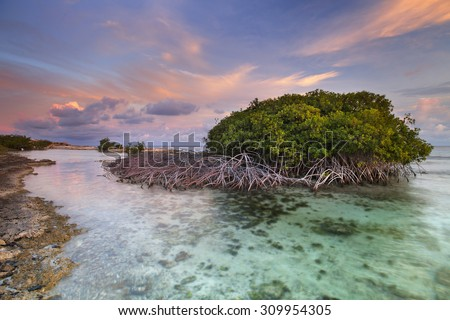 Mangrove trees in a tropical lagoon on the island of Curaçao, Netherlands Antilles. Photographed at sunset. - stock photo