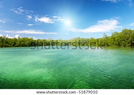 mangrove trees in caribbean sea - stock photo