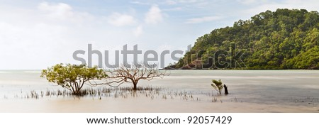 mangrove trees in tropical sea of daintree rainforest queensland Australia, hill with exotic pristine rain forest, long exposure panorama landscape paradise island - stock photo