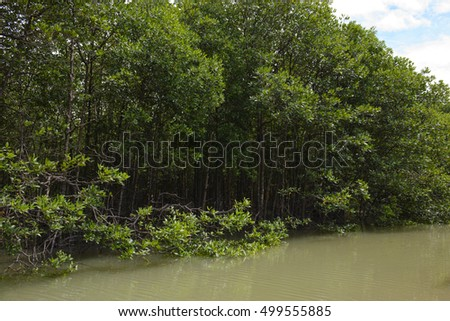 Mangrove trees on a river at Thailand