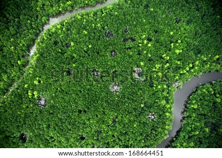 mangroves aerial view - stock photo