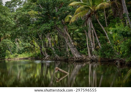 Mangroves Balandra East Coast Trinidad - stock photo