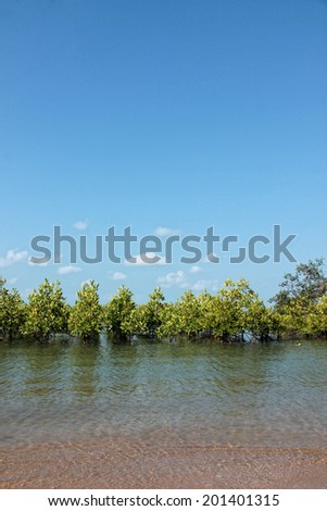 Mangroves growing in shallow lagoon in Thailand - stock photo