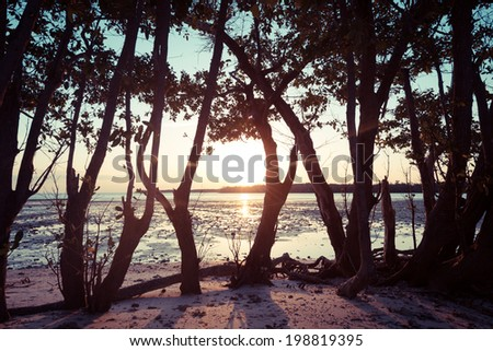 Mangroves in Florida Everglades - stock photo