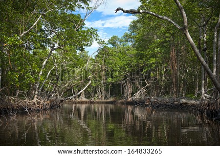 Mangroves in the Florida everglades - stock photo