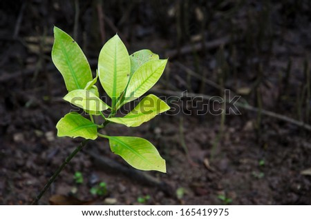 Mangroves in the tropics, Thailand - stock photo