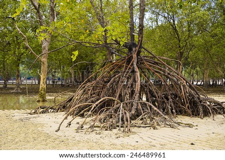 Mangroves on Ko Phayam, Thailand - stock photo