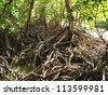 Mangroves, Queensland, Australia - stock photo
