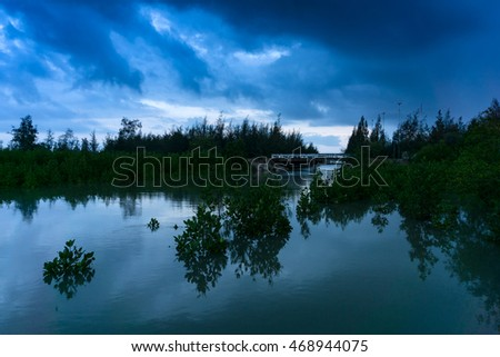 mangroves with cloud in the morning
