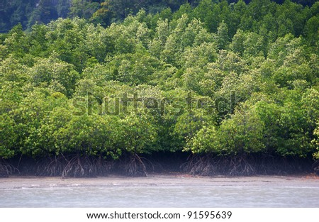 Mangrovye thickets at islands Panak (Thailand) - stock photo
