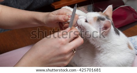 manicure for cats, sharpen claws cat