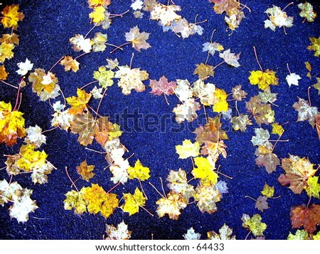 Manipulated exposure of leaves on asphalt. - stock photo