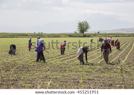 MANISA, TURKEY; People working on a field in Anataolia, Turkey.