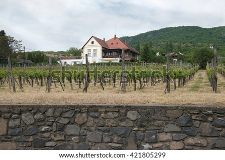 mansion with vineyard - stock photo