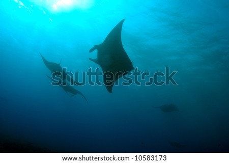 manta ray - stock photo