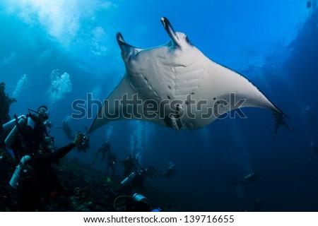 Manta ray over diver in maldives - stock photo