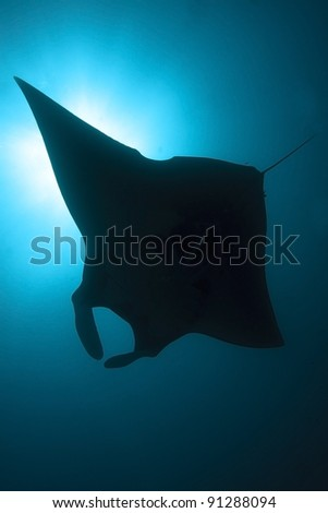Manta ray silhouette - stock photo