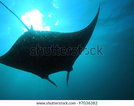 Manta Ray Silhouette - Komodo, Indonesia