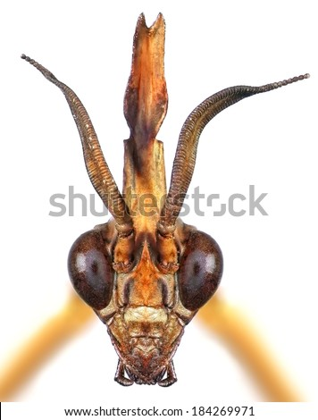Mantis head isolated on the white background. Close up. - stock photo